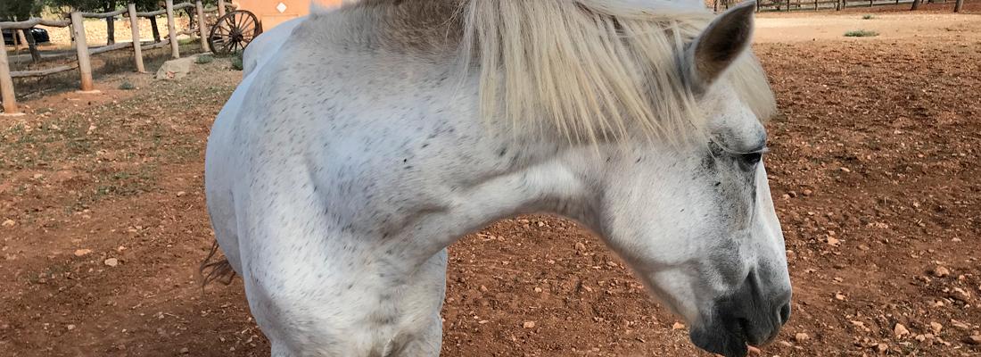 Constelaciones con caballos
